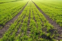 Farm land in Bavaria Stock Photos