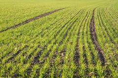 Farm land in Bavaria Royalty Free Stock Photography