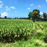 Farm land Stock Image