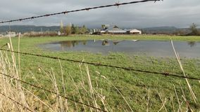 Farm Land Flooding Dolly Shot. A dolly shot of a farm field flooded after heavy rain stock video