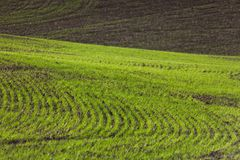 Farm Land. Green wheat fields Royalty Free Stock Photo