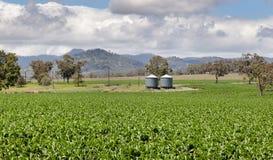 Farm land near Quirindi In inland rural Australia. Rich farming country in NSW near Quirindi In inland rural Australia royalty free stock image