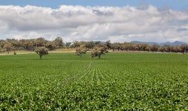 Farm land near Quirindi. Rich farming country in NSW near Quirindi Royalty Free Stock Images
