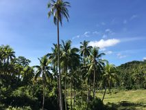 Farm land with palmtrees in the hills of Anda. Bohol the Philippines Royalty Free Stock Images