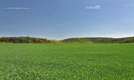 Farm land and the trees stock images