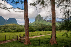 Farm Lands in Moorea. Royalty Free Stock Photo