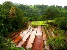 farm landscape Стоковое Фото