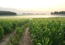 Farm landscape Royalty Free Stock Photos