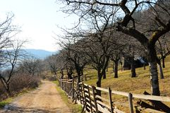 Farm landscape. And a countryside road on a spring day Stock Images