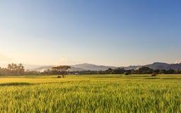 Farm landscape. Countryside landscape sunset in Thailand Stock Photos