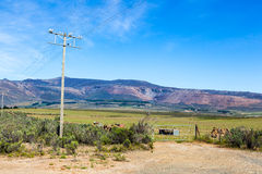 Farm landscape. A telephone pole runs next to a farm gate in a mountainous area in the western cape, South Africa royalty free stock photo
