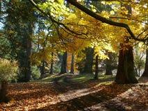 Farm Lane. A farm lane in autumn Royalty Free Stock Photography