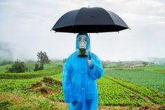 Farm lettuce on a rainy day Royalty Free Stock Image