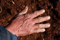 Farm life Stock Photos