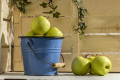 APPLE IN BUCKET WOOD  BACKGROUND. FARM LIFE CLASSIC STILL LIFE FOOD. SUMMER EAT DIET. APPLE IN BLUE BUCKET ON WOOD BACKGROUND Royalty Free Stock Photography
