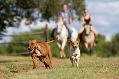 Farm life Stock Photography