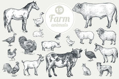 Farm livestock and poultry set. Stock Photos