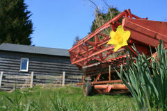 Farm machinery. Focus on a spring daffodil in a field on a farm, with a red harvesting machine in the background against a wooden constructed farm building royalty free stock image