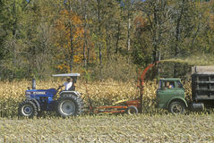 Farm machinery harvesting corn Stock Photos