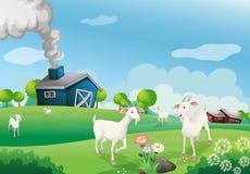 A farm with many goats vector illustration