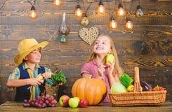 Farm market. Children presenting farm harvest wooden background. Kids farmers girl boy vegetables harvest. Farming stock images