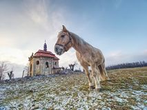 Farm meadow for horses at church or chapel. Farm meadow for horses at village church or chapel. End of civilization winter trees tower thick stud stallion stalk royalty free stock image