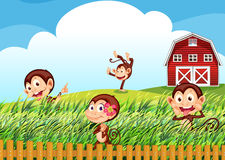 A farm with monkeys Royalty Free Stock Photo