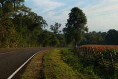 Farm morning. At tak province, thailand Royalty Free Stock Photos