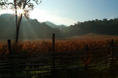 Farm morning Stock Image