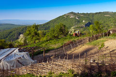 Farm in the mountains. Arable land on the mountain top and tractor in the distance Stock Image