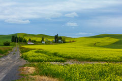 A Farm and a Mustard Crop Royalty Free Stock Photography