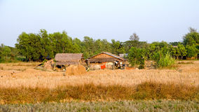 Farm Myanmar Royalty Free Stock Photo