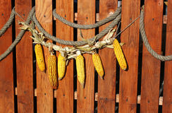 Farm natural dry maize Stock Images