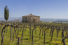 Farm near Montepulciano Stock Photography