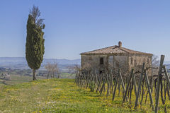 Farm near Montepulciano Royalty Free Stock Images