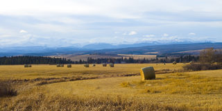 Farm near the Rocky Mountains Stock Photography