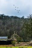 A farm near Rievauxl Abbey 4 Royalty Free Stock Photography
