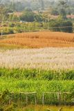 Farm in northeast thailand Royalty Free Stock Image