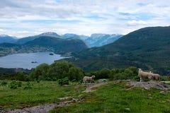 Farm in Norway Royalty Free Stock Photos