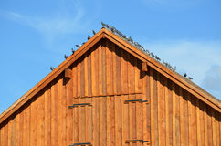 Farm. Old farm house and barn birds on the roof stock images