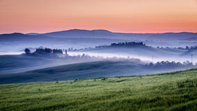 Farm of olive groves and vineyards in foggy morning. Tuscany Royalty Free Stock Photos
