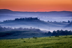 Farm of olive groves and vineyards in foggy sunrise Stock Photography