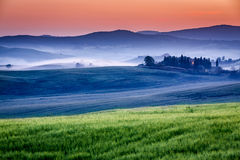 Farm of olive groves and vineyards in foggy sunrise Stock Photo