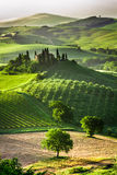 Farm of olive groves and vineyards Royalty Free Stock Photos