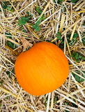Farm orange pumpkin on hay straw Stock Photography