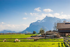 Green Pasture at the Base of the Alps in Austria Stock Image