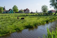 A farm on the outskirts of Amsterdam in the Netherlands stock image