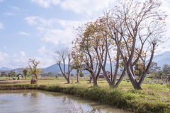 Farm in Pai with blue sky Stock Image