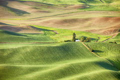 Farm In The Palouse Royalty Free Stock Image