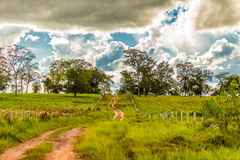 Farm at Pantanal, Brazil. Pantanal is one of the world's largest tropical wetland areas located in Brazil , South America Royalty Free Stock Image